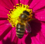 abeille.png